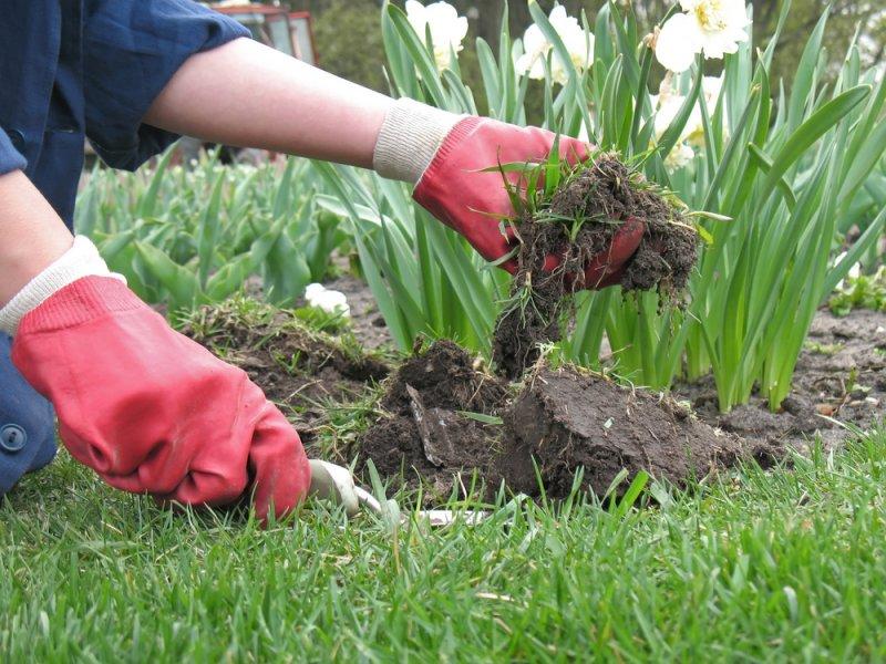 vrtlarenje u rukavicama